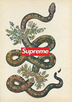 Supreme - oseinhas