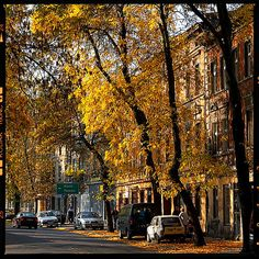 Pictures of autumn in the city -  Canon 300D Camera