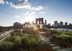 This rooftop garden in New York is like a meadow in the sky - blogs de Architecture