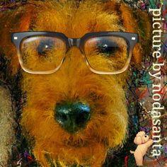PCペイントで絵を描きました! Art picture by Seizi.N:            #イラスト #dog #YouTube 仲良しのワンちゃん達をデカ顔でお絵描き...