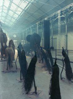 witchesandslippersandhoods:    Alexander McQueen S/S 2009 catwalk, photographed by Anne Deniau