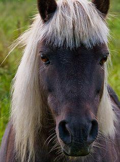 Портретная Фотография, Дикие Животные, Сельскохозяйственные Животные, Миниатюрные Лошади, Ослы, Красивые Лошади, Домашние Птицы, Козы, Милые Животные