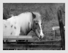 Portrait of the Dreaming Horse. Nellie Vin.   Flickr - Photo Sharing!