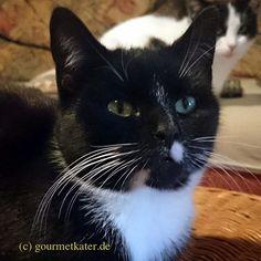 Mimi (vorn) und Lilli #cats #cat