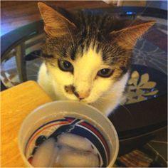 Kitty cat wants my water
