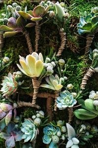 Wedding Feature: The Colorful Life Photos by Mark Eric Weddings, LLC Flowers by Au Courant Succulent Ideas, Little Plants, Life Photo, Boutonnieres, Herb Garden, Backdrops, Succulents, Bloom, Herbs