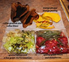 How to Feed Your Compost Worms: What, When, & How