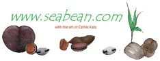Sea Beans/Drift Seeds ~ Welcome to www.seabean.com