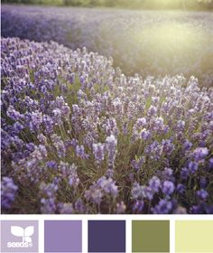 Color: Field Hues by Design Seeds - lavender, medium purple, plum, khaki, light green.