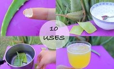 10 ways I use Aloe Vera! - Love this stuff!!