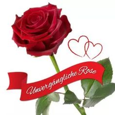 Unvergängliche Rose - Das besondere Geschenk via: www.monsterzeug.de Das (wirkliche) Symbol ewiger Liebe – die Unvergängliche Rose. Direkt nach dem Pflücken veredelt, bleibt sie jahrelang frisch und duftend.