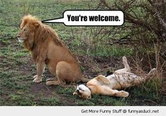 funny sex memes for him - Google Search