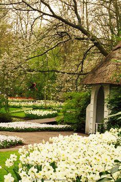 """Keukenhof, Holland"" by Natali Antonovich on Flickr ~ Keukenhof Gardens, The Netherlands"