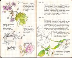 garden journal -- like the way this is laid out with blocks of text and illustrations
