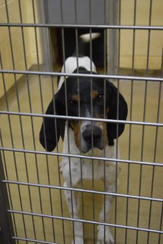 JOHNNY (sweetheart) IS WAITING FOR LOVE & TLC!!! MERCER COUNTY ANIMAL SHELTER PRINCETON, WV... https://www.facebook.com/volunteer.mercerco/photos/a.277275742381743.57344.277271479048836/653502164759097/?type=3&theater
