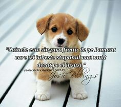Animals And Pets, Facebook, Dogs, Impressionism, Socrates, Pets, Doggies, Pet Dogs