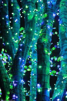 lights on tree trunks