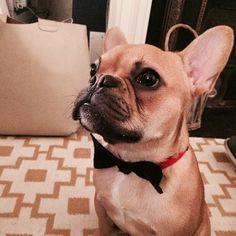 Senór Baxter @Senor Baxter | Websta, French Bulldog Puppy