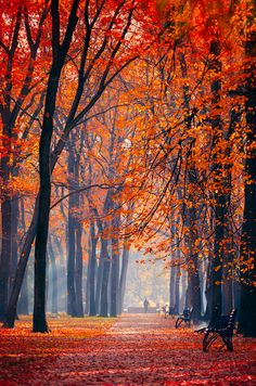 Autumn colors in Kharkiv, Ukraine Travel and see the world Foto Nature, All Nature, Image Nature, Autumn Nature, Beautiful World, Beautiful Places, Beautiful Pictures, Amazing Places, Beautiful Scenery