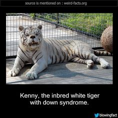 1000+ images about Kenny the Down Syndrome Tiger on ...