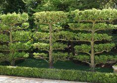 alexander grivko / rhododendron garden, surrey
