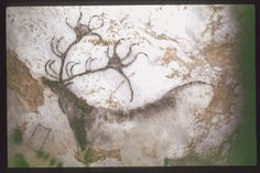 MONTIGNAC (Dordogne, 24). Grotte de Lascaux. Bilan des études. Récapitulation Légende : Diverticule axial, paroi droite : grand cerf monochrome, noir, de profil gauche. Secteur 2, paroi droite, panneau 1, figure 06 (normes d'archivage N.Aujoulat, 1987).