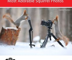 Russian Photographer Vadim Trunov Takes the Most Adorable Squirrel Photos - Photography Inspiration on I Heart Faces