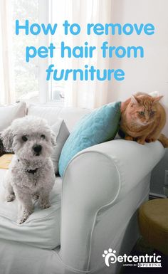 Petcentric.com has the answers you need as cat and dog lovers to tackle shedding fur everywhere! One trick to remove pet hair from furniture is to use the static electricity from an inflated balloon to pick up the hair. For carpet and rugs, a simple bristle brush will do the trick. If you're hoping to prevent fur from collecting in places like your car, try spraying seats with a diluted mix of liquid fabric softener and water or just wipe the upholstery with dryer sheets.