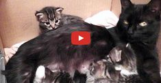 There's no nicer sound than when a mama cat talks to her kittens