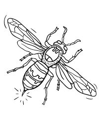 Hornet Coloring Page