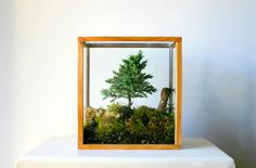 Table Top Forest Terrarium by PsychicCeremonies on Etsy