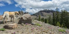 A beautiful hiking trail near Truckee with a stiff ascent to the tallest peak in…
