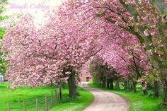 Shingle Cottage....❤: Blossom time