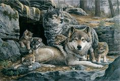 Wolf jigsaw puzzles are one of the most popular themes among puzzle enthusiasts. We have a wide range of wolf puzzle sizes including 1000 and 1500 pieces. Wolf Spirit, Spirit Animal, Beautiful Wolves, Animals Beautiful, Animals And Pets, Cute Animals, Wolf Artwork, Wolf Pictures, Wolf Tattoos