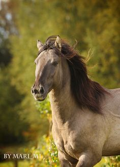 After finding these horses are hypoallergenic, I can't help but want property and a few thousand dollars...Башкирская - фотографии - equestrian.ru