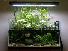 Planted Ripariums: A New Dimension in Aquarium Plant Care - yum