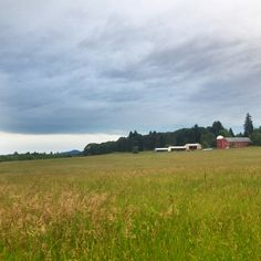 My evening walk in Corvallis Oregon