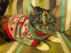 Twiggles (because who doesn't love a cat in a jumper!) Leith Library #Festivefurballs competition entry from @GoogleLocalEdin | Lockerz