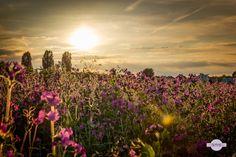 Im Gegenlicht - Eine Blumenwiese im Gegenlicht. A flower meadow in the backlight.