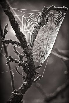 Black and White Cobweb