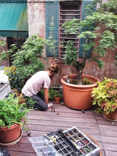 NYC Drip Irrigation company, New York Plantings Irrigation and landscape Lighting installing a rooftop garden irrigation system for this NYC penthouse garden