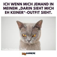 Wer hat auch solche Outfits? 😂 #meme #funnymeme #lustigesmeme #memes #lustig #catmeme #katzenmeme #memedestages Memes, Humor, Cats, Animals, Outfits, Funny Stuff, Jokes, Black, Pictures