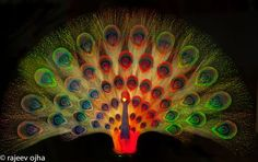 A bright colorful Peacock... Photo by Rajeev Ojha -- National Geographic Your Shot