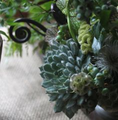 I like the idea of artful succulent arranging, but I'd do so with whole living plants, not just cuttings.