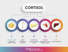 Too much cortisol is a bad thing. Learn how to balance cortisol levels so you can overcome stress and grow stronger as a result. Chronic Stress, Adrenal Stress, Adrenal Fatigue, Hormonal Weight Gain, High Cortisol, Estrogen Dominance, Adipose Tissue, Growth Hormone, Fat Loss Diet