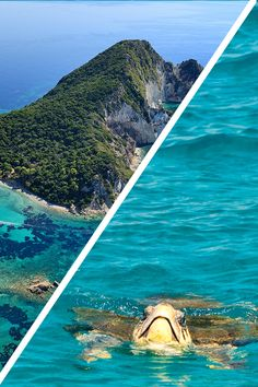 Wouldn't you love to swim next to a 🐢 ⛵ Start by sailing from Zante to Marathonisi, the Turtle Island and explore its wonderful beaches that are a favorite nesting spot for caretta-caretta babies. Zakynthos, Strand, Summer Fun, Good Times, Surfboard, Sailing, Explore, Beaches, Turtle