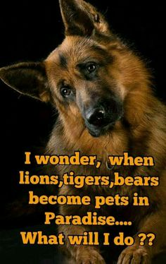 I wonder. When lions, tigers, and bears become pets in paradise, what will I do?
