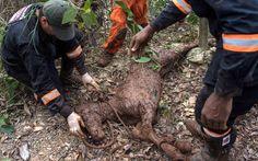 06/11 - Bombeiros trabalham no resgate de um cavalo que estava preso na lama após o rompimento de barragens de rejeitos da mineradora Samarco no Distrito de Bento Rodrigues, no interior de Minas Gerais