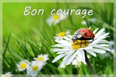 Good Day Messages, Bon Courage, Encouragement, Daily Motivation, Good Morning, Animals, Diffuser, Leo, Gifs