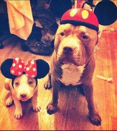 gahhh micky and minnie pitbulls!!!!